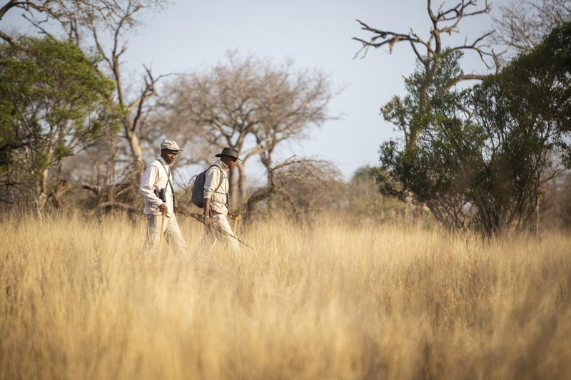 Tracker Academy student Ngwenya and student tracking lions at Londolozi